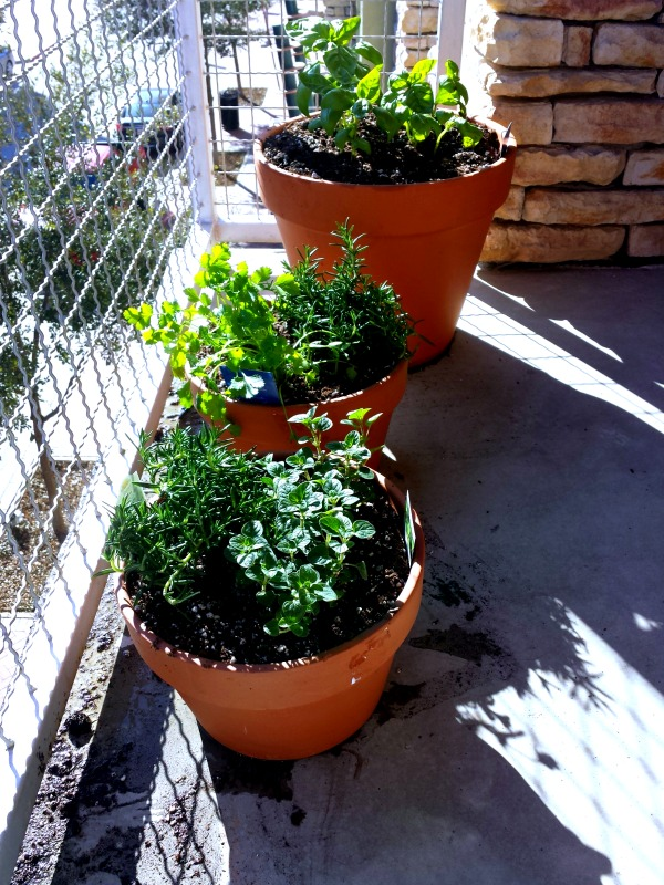 Balcony Plant Planting a Balcony Herb Garden
